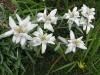 giardino_botanico_nevegal1